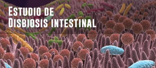 Estudios de microbiota intestinal - Disbiosis intestinal